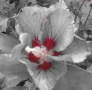 Flower_funkyphotography
