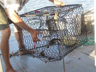 Crabcage