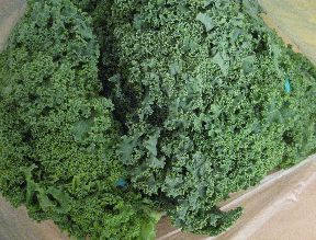 Lots of kale