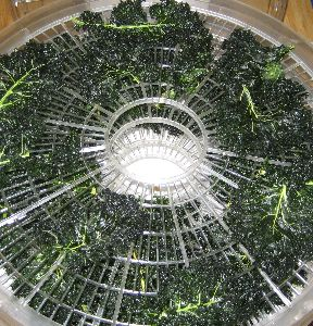 Kale chips_done