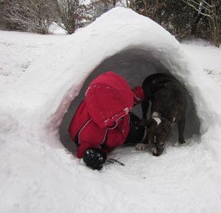 1_dog_eating_snow