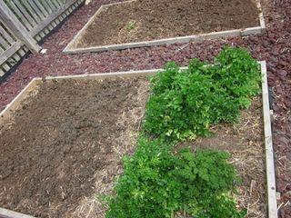 Garden ready