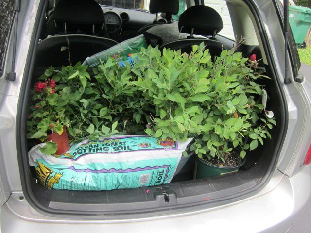 Plants_car